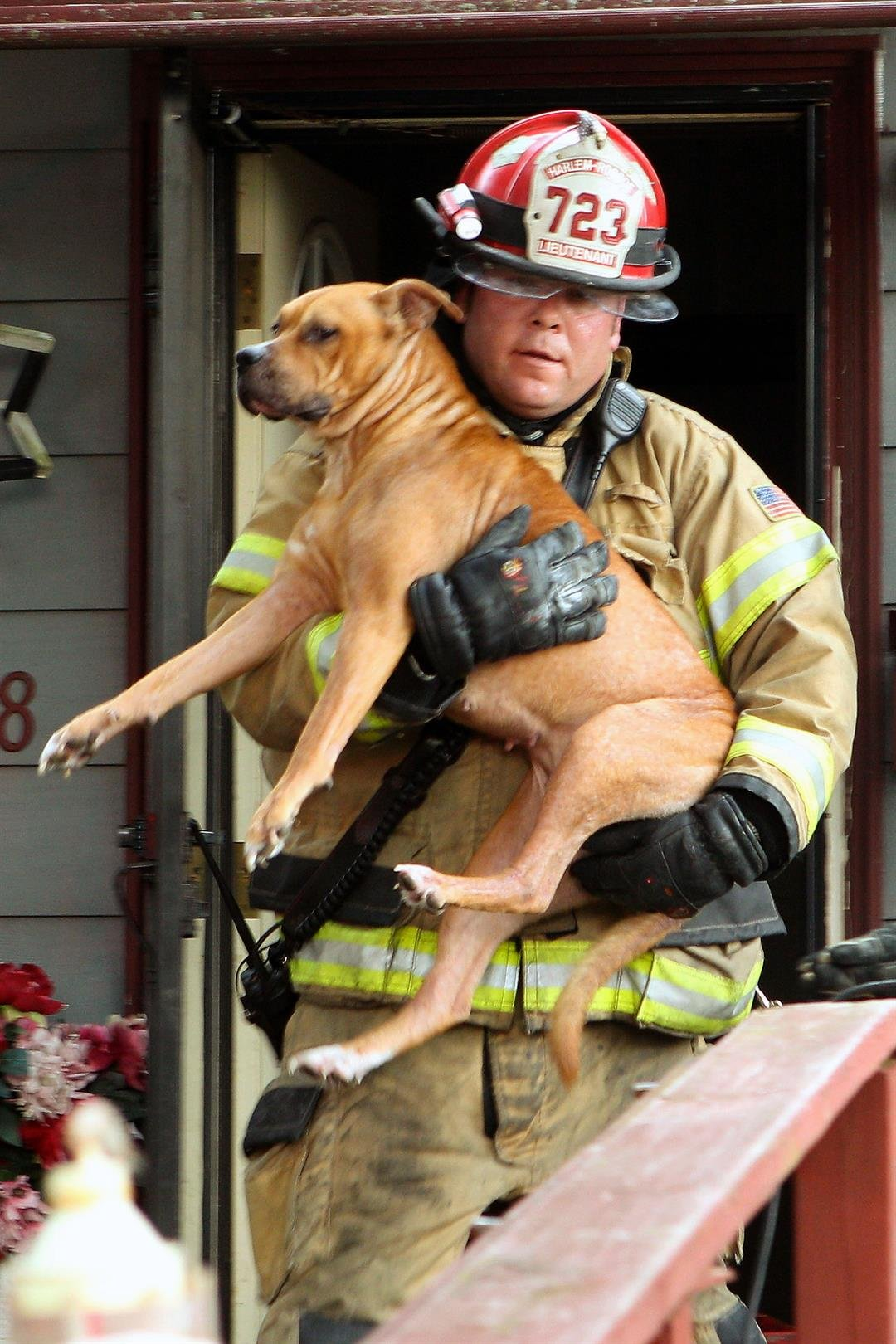 Harlem-Roscoe Fire Lieutenant Patrick Trollop rescuing a dog from a fire in the 400 block of East Greenview, Machesney Park