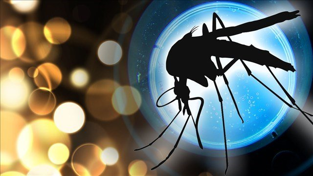 HP Resident Tests Positive for West Nile