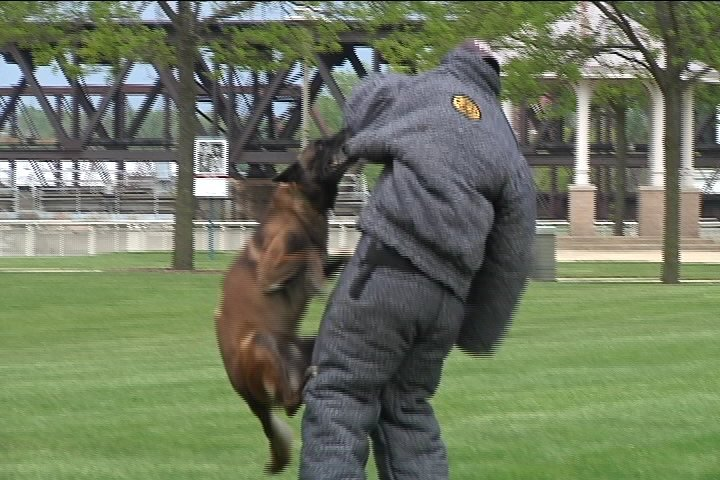 File photo, Rockford Police Department K-9 unit training 2012.