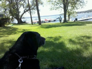 Two of Eric's favorites: Theo-Dog and Lake Geneva.