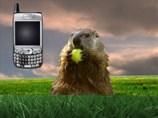 Text GROUNDHOG to 247365
