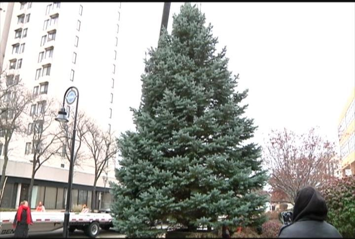 Christmas tree on display in downtown Rockford - WREX.com ...