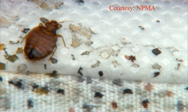 Can Visitors Bring Bed Bugs
