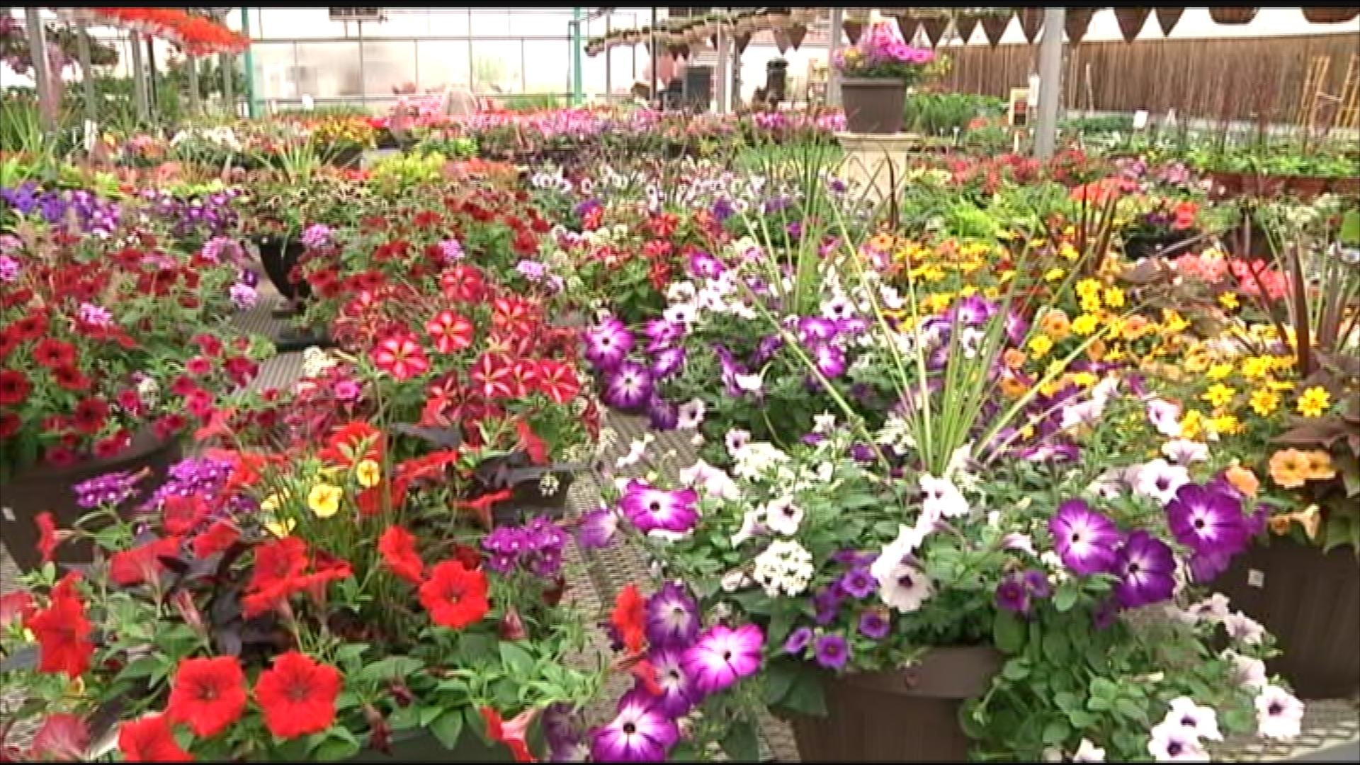 Local flower shop sees high volume of customers on Mother s Day KTTC Ro