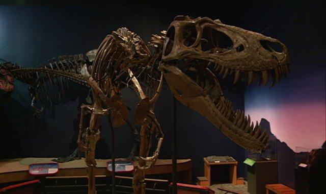 Burpee Museum Of Natural History Dinosaurs Bones Lower Level